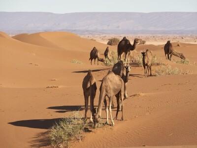 7 Мароко