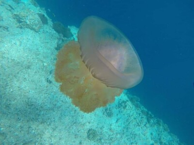 7 Малдиви